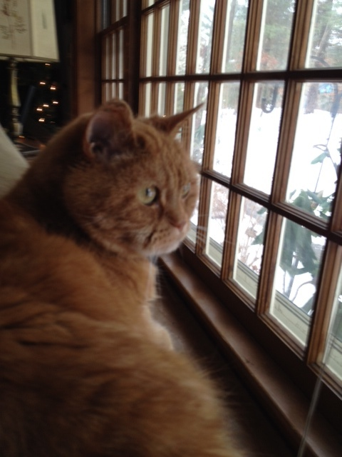 T contemplating snow