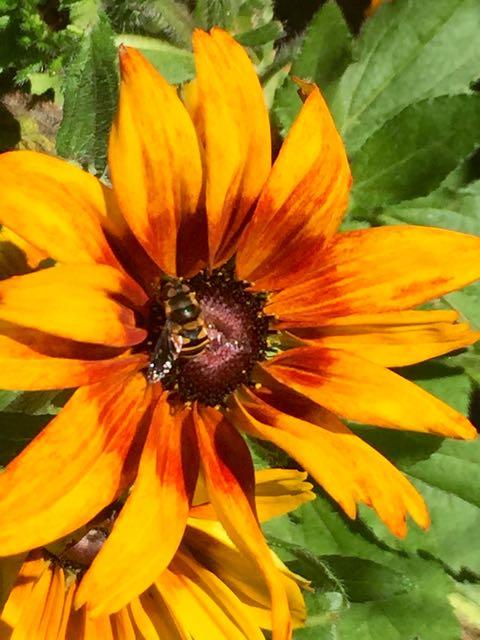 Beeand flower